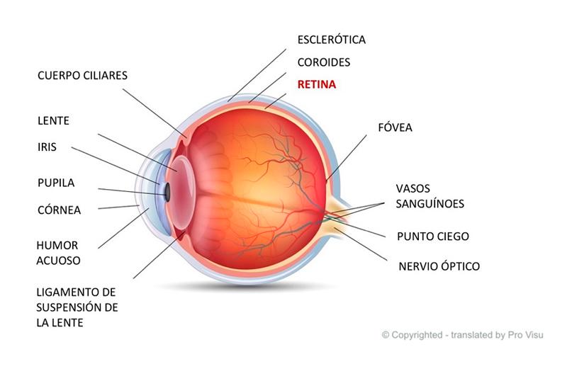 operacion-retina