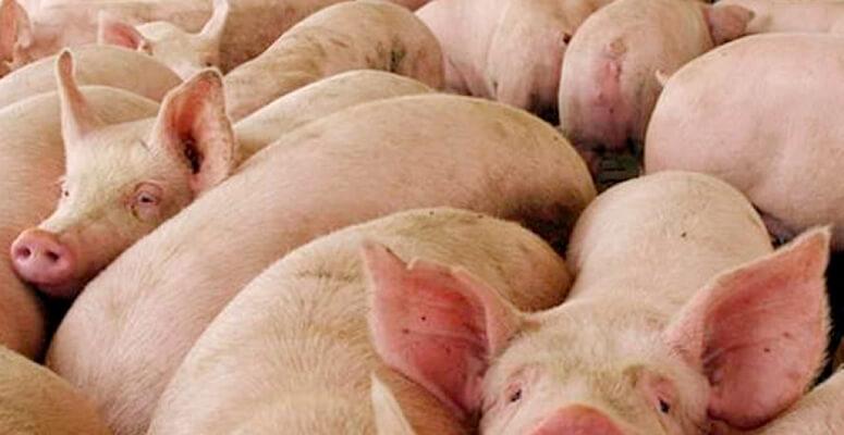 ACUMAR Cerdos