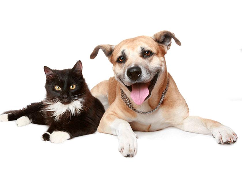 Vacunación de perros y gatos