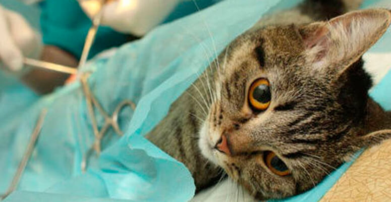 Castración gratuita de perros y gatos en barrios y localidades