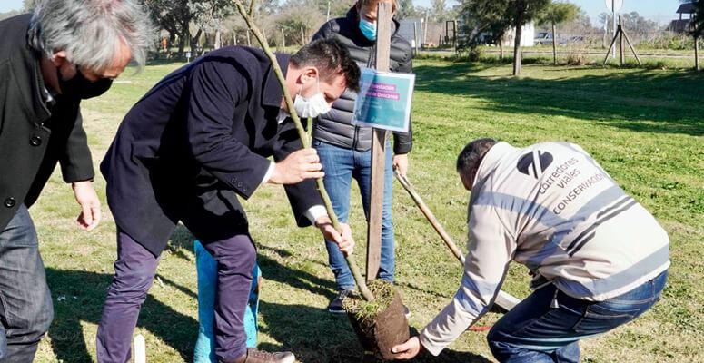 Forestación en Autopista Ezeiza-Cañuelas