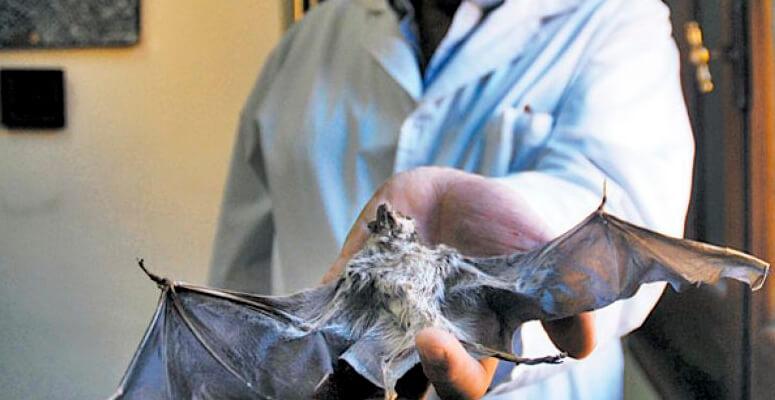 Detectan en Uribelarrea un caso de rabia animal en un murciélago
